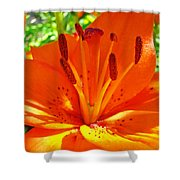 Orange Lily Flower Art Print Summer Lily Garden Baslee Troutman Shower Curtain