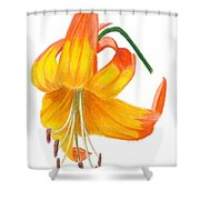 Orange Lily No 3 Shower Curtain