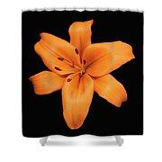 Orange Lily On Black Shower Curtain