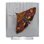 Orange Mint Moth - Pyrausta Orphisalis Shower Curtain