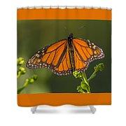 Orange Monarch Shower Curtain