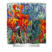 Yellow-orange Kangaroo Paws At Pilgrim Place In Claremont-california- Shower Curtain