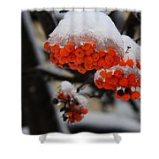 Orange Mountain Ash Berries Shower Curtain