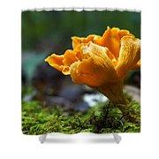 Orange Mushroom Flower On The Forest Floor Shower Curtain