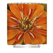 Orange Orange Orange Shower Curtain