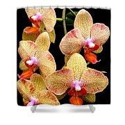Orange Orchid Phalaenopsis Shower Curtain