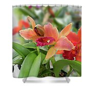 Orange Orchids 2 Shower Curtain