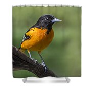 Orange Oriole Shower Curtain