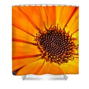 Orange Petal Shower Curtain