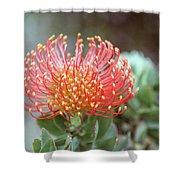 Orange Pincushion Protea Shower Curtain