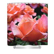 Orange-pink Roses  Shower Curtain