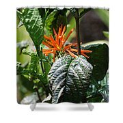 Orange Plants Shower Curtain