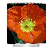 Orange Pop Photograph Shower Curtain