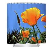 Orange Poppy Blue Sky Shower Curtain