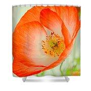 Orange Poppy Offering Nectar Shower Curtain