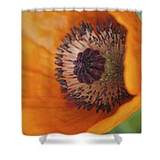 Orange Poppy With Texture Shower Curtain