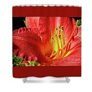 Orange-red Day Lily Shower Curtain