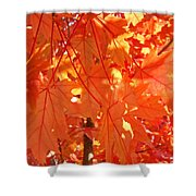 Orange Red Fall Leaves Autumn Tree Art Baslee Troutman Shower Curtain