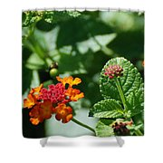 Orange  Red Flowers Shower Curtain