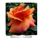 Orange Rose 1 Shower Curtain