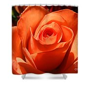 Orange Rose Photograph Shower Curtain