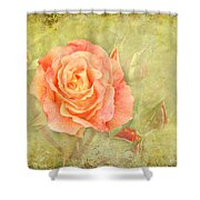 Orange Rose With Old Paint Texture Background Shower Curtain