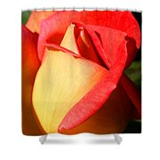 Orange Rosebud Shower Curtain