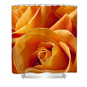Orange Roses Shower Curtain by Garry Gay