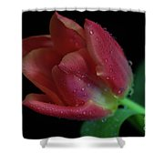 Orange Ruby Tulip Shower Curtain by Tracy Hall