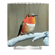 Orange Rufus Shower Curtain