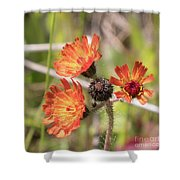 Orange Small Flowers With Buds Shower Curtain