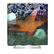 Orange Starfish Shower Curtain