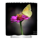 Orange Sulphur Butterfly Portrait Shower Curtain
