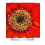 Orange Sunflower Shower Curtain