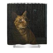 Orange Tabby Cat Looking Shower Curtain