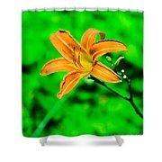Orange Tiger Lily Shower Curtain