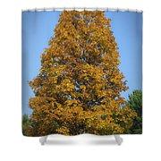 Orange Tree Pipestem Short Course Shower Curtain