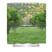 Orange Trees And Sheep Flock Shower Curtain