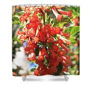 Orange Trumpet Flower Shower Curtain