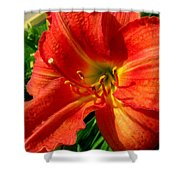 Orange Trumpeting Lily Shower Curtain