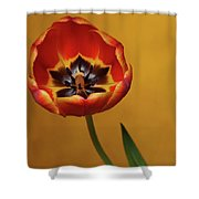 Orange Tulip 2 Shower Curtain