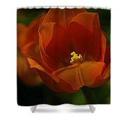 Orange Tulip Art Shower Curtain