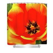 Orange Tulip Flowers In Spring Garden Shower Curtain