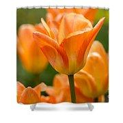Orange Tulips 2 Shower Curtain