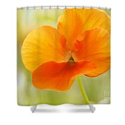Orange Viola On A Brilliant Spring Day Shower Curtain