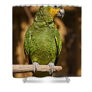 Orange-winged Amazon Parrot Shower Curtain by Adam Romanowicz