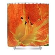 Orange-yellow Daylily Shower Curtain