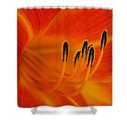 Orange You Glad Shower Curtain