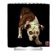 Orangeenglish Bulldog Dog Art - 1368 - Bb Shower Curtain