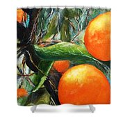 Oranges Extract Shower Curtain